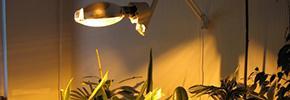 Фитолампы, фитосветильники