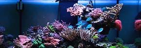 Террариумы, аквариумы