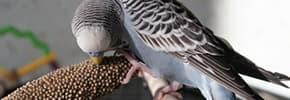 Витамины, препараты, пищевые добавки для птиц